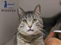 ARISTOTLE's story Aristotle is has a friendly reserved
