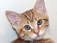 My story Arizona's adoption includes his: neuter,