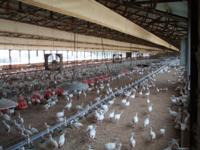 Butterball Contract Turkey farm in full production with