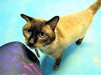 Arlo's story DOB: (approximate) 1/1/13 Arlo was found