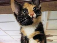 Arry's story Arry is a female calico kitten, born on