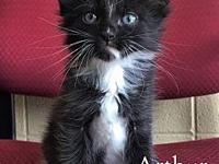Arthur's story Arthur's adoption fee is $80 which