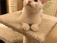 Arthur's story These are the cutest little kittens. The