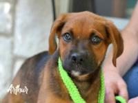 Arthur is a sweet, fun loving, energetic puppy. Good