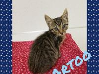 Artoo's story Artoo is a playful kitten that is looking