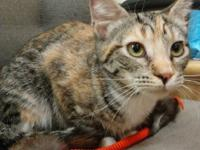 Arwak is a pretty torbie and white girl who is super