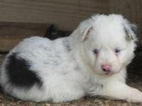 This male was born 04-14-15. He has 2 pretty blue eyes.