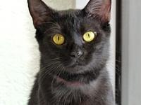 Ash's story Ash is a very sweet and shy gal looking for
