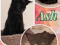 Ash's story More info coming soon! All these peanuts