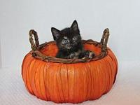 Ashe's story Ashe is an adorable, tiny tortie with a