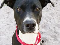 Ashe's story Ashe is a precious 1 year old Lab mix. She