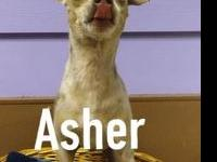 Asher's story This brave little survivor has endured