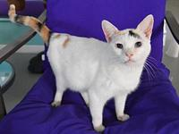 ASHLEN's story Ashlen was found and rescued off the