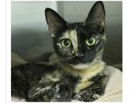 Ashlie is a spayed female about ten months old. She
