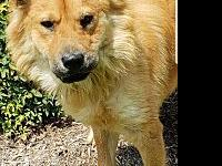 Aslan's story +++Aslan is being fostered in HOUSTON,