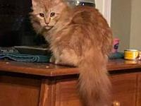 Aslan's story Aslan is a year or two and gorgeous. He