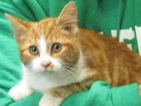 Aslan's story To adopt one of our animals, please visit