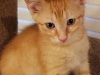 Aslan Fostered (Randa)'s story Meet Partners for Pets'