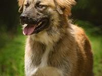 Aslan's story You can fill out an adoption application