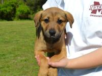 Aspen is an adorable 3 month old Mixed Breed puppy,