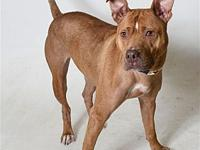 Aspen's story Aspen is looking for love! She is very