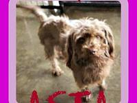 ASTA's story Please contact Jenny Cope