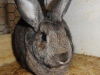 Aster is a delightful, friendly bunny who loves to be