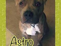 This sweetie is Astro, and his foster mom can't say