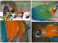 Breeders of Macaws/Parrots/Cockatoos/Amazons on sale