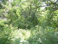 Around 40 acres of excellent deer environment. Located