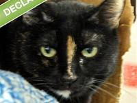 Athena -- Bonded Buddy With Midnight's story Athena and