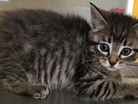 ATHENA's story 8 weeks old. Female Adoption fee: $75