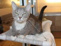ATHENA's story Athena (A228356) is a sweet girl that is