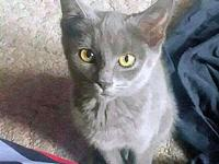 Athena's story Athena is a female grey kitten, born on