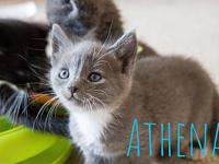My story Meet Athena!This baby will be available on