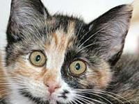 My story Athena's adoption includes her: spay,