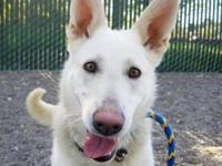 Athena( A160608) is a 1 year old pup who is looking for