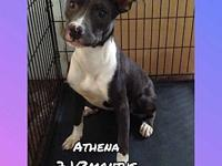 Athena's story Hi! My name is Athena and I'm looking