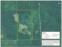 Eighty acres of great hunting land with lots of large