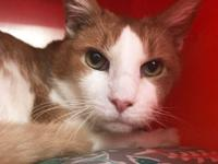 Atom was recently brought to our Adoption Center for