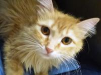 For more information on this cat, call us at  or email