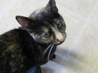 Atta's story Atta is a one year-old female who was