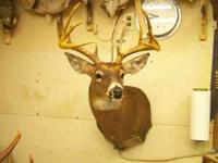 I will mount your W.T. Deer for the low,low price of
