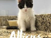 ATTICUS's story ATTICUS is a precious young & playful