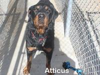 Atticus's story Say hello to Atticus. He is a big boy