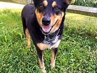 Attie's story Attie is a sweet, loving girl. She walks