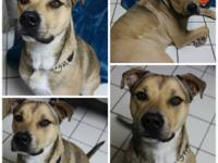 Aubie is a delightful young shepherd mix of about 2