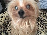 Aubrey Rain's story ADOPTION FEE $250 Aubrey is a tiny