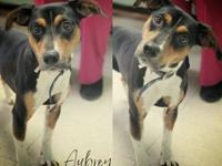My story Aubrey is a sweet, shy and very easy going