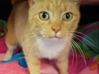 """Audi"" is a very friendly and loving boy. Part of his"
